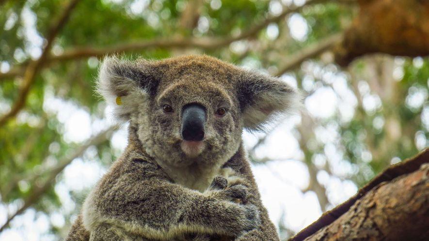 Meet the icon: Port Macquarie