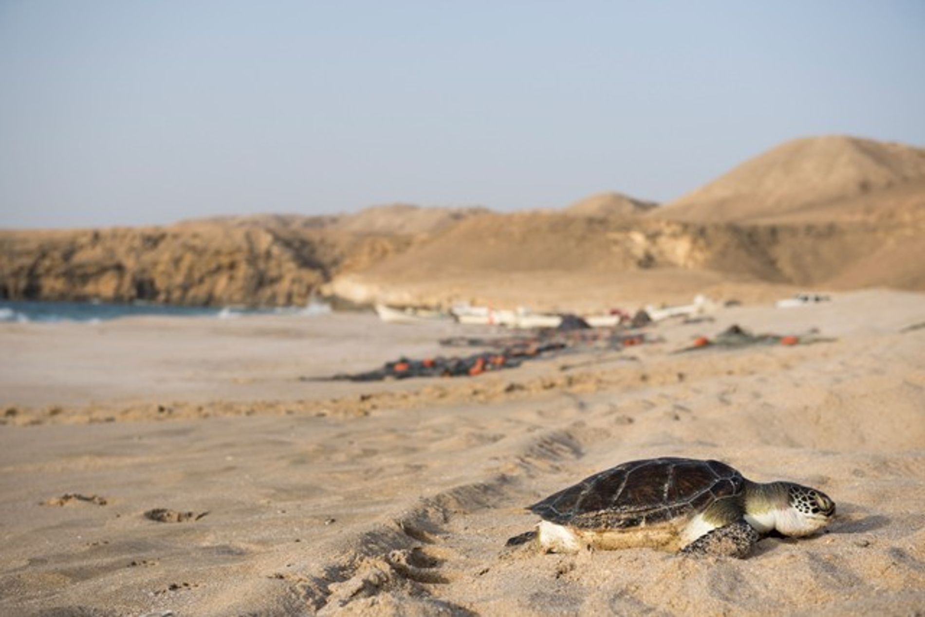 Wildlife: Where to spot Oman's big five