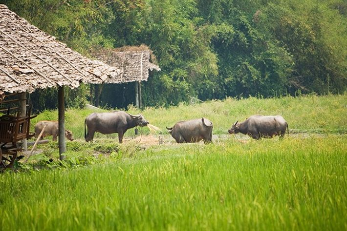 Thailand.