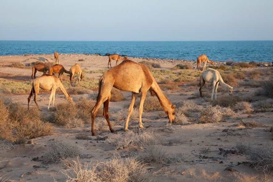 Where to see wildlife in Oman