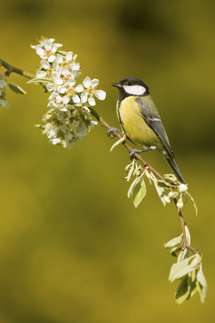 Great tit sitting on branch