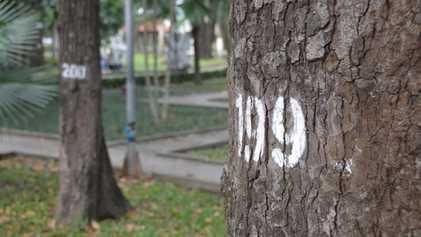 Ho Chi Minh City: Trees a crowd