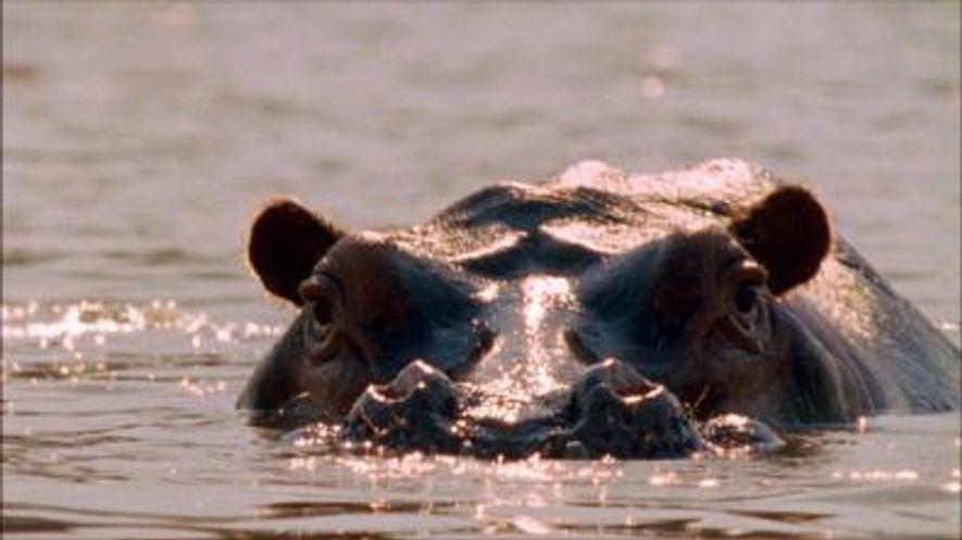 Happy Hippo Day!