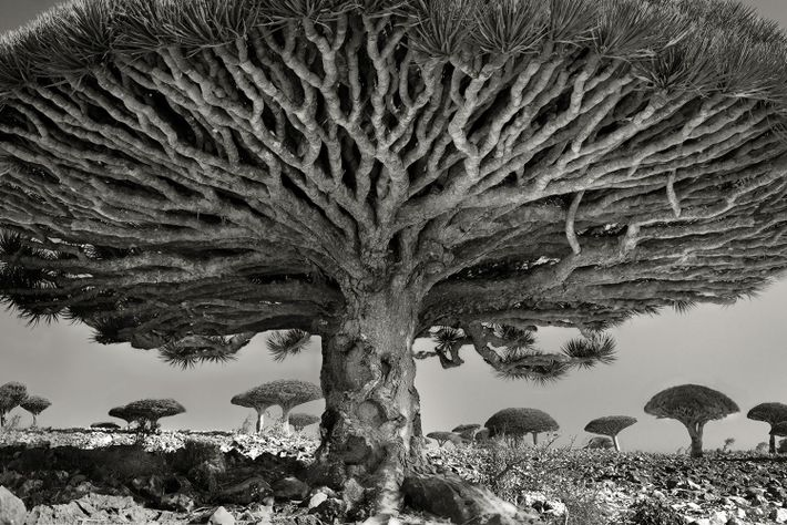 beth moon trees