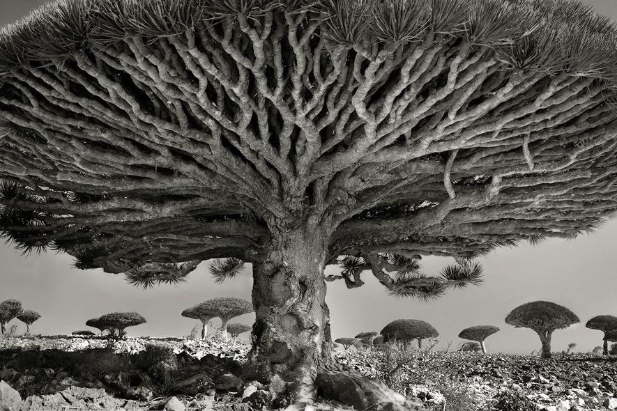 beth moon trees