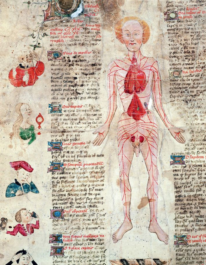 Galen's view of the circulatory system in 'De Arte Phisicali et De Cirurgia' (1412) by John ...