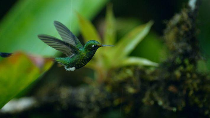 Hummingbird in a rainstorm