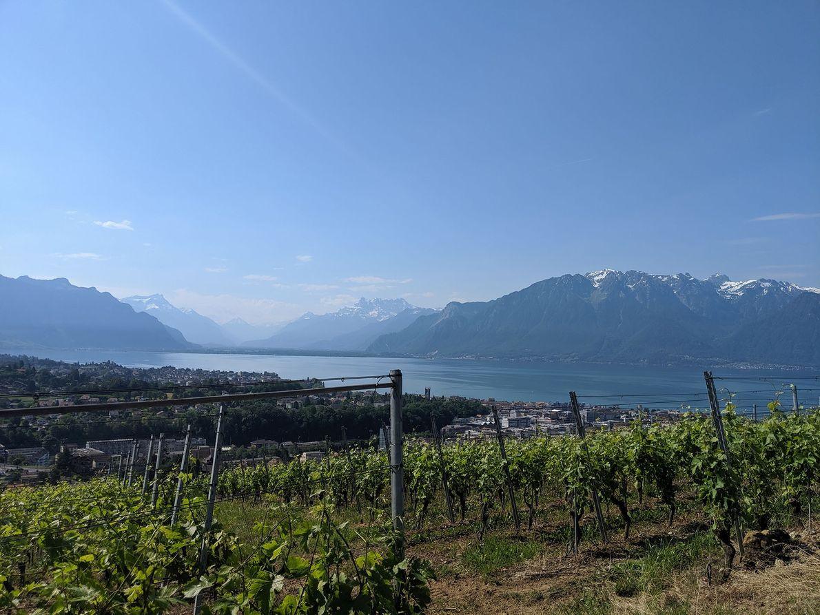 The best wine tasting spots in Switzerland