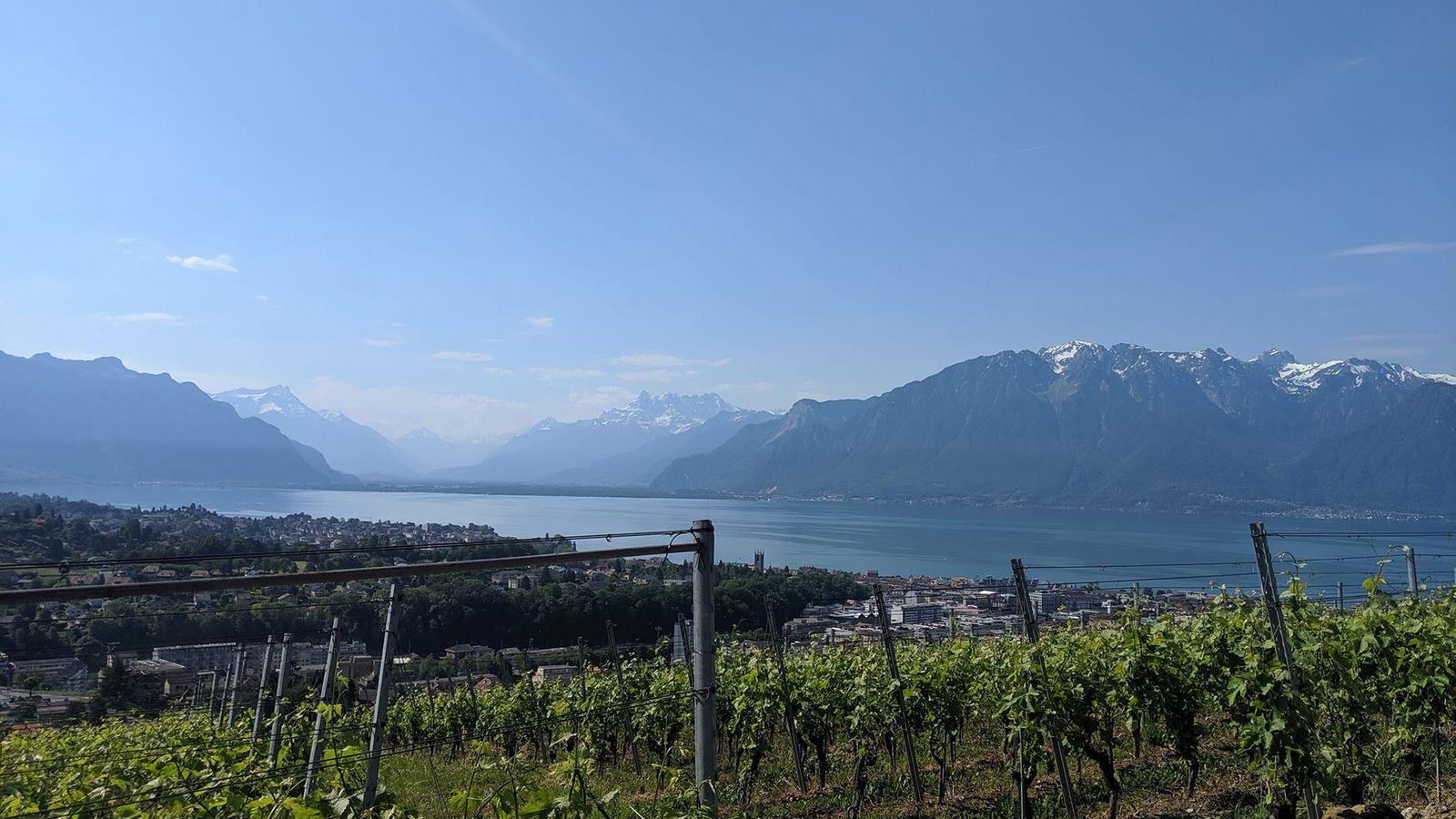 Vineyards in Lavaux, Lake Geneva