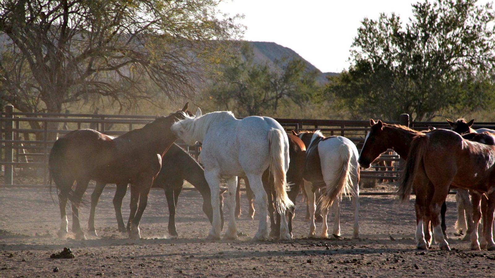 Horses outdoors