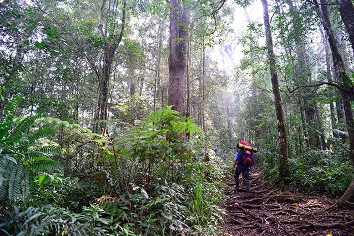 Gunung Tujuh, Kerinci National Park
