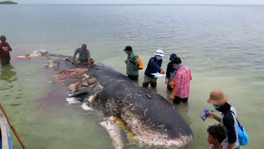 Dead whale found with 6 kilograms of plastic in stomach