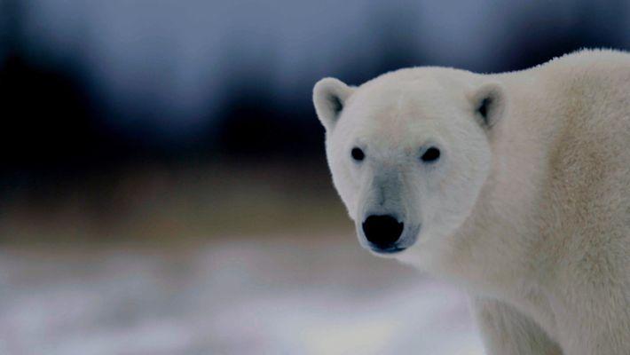 International Polar Bear Day_UK