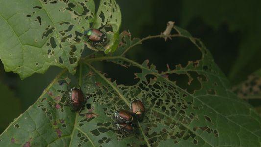 Invasive Species 101