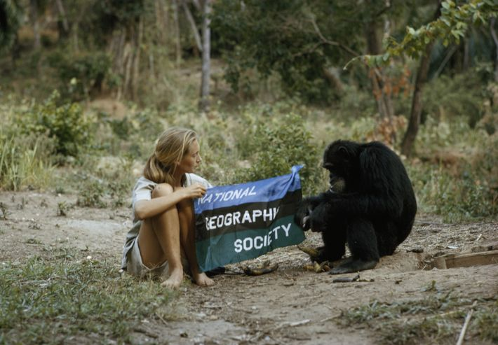 Meet the heroes who are saving our endangered species: Jane Goodall