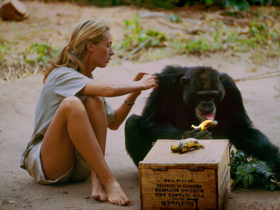 Discover the Amazing Story of Jane Goodall in a New Film