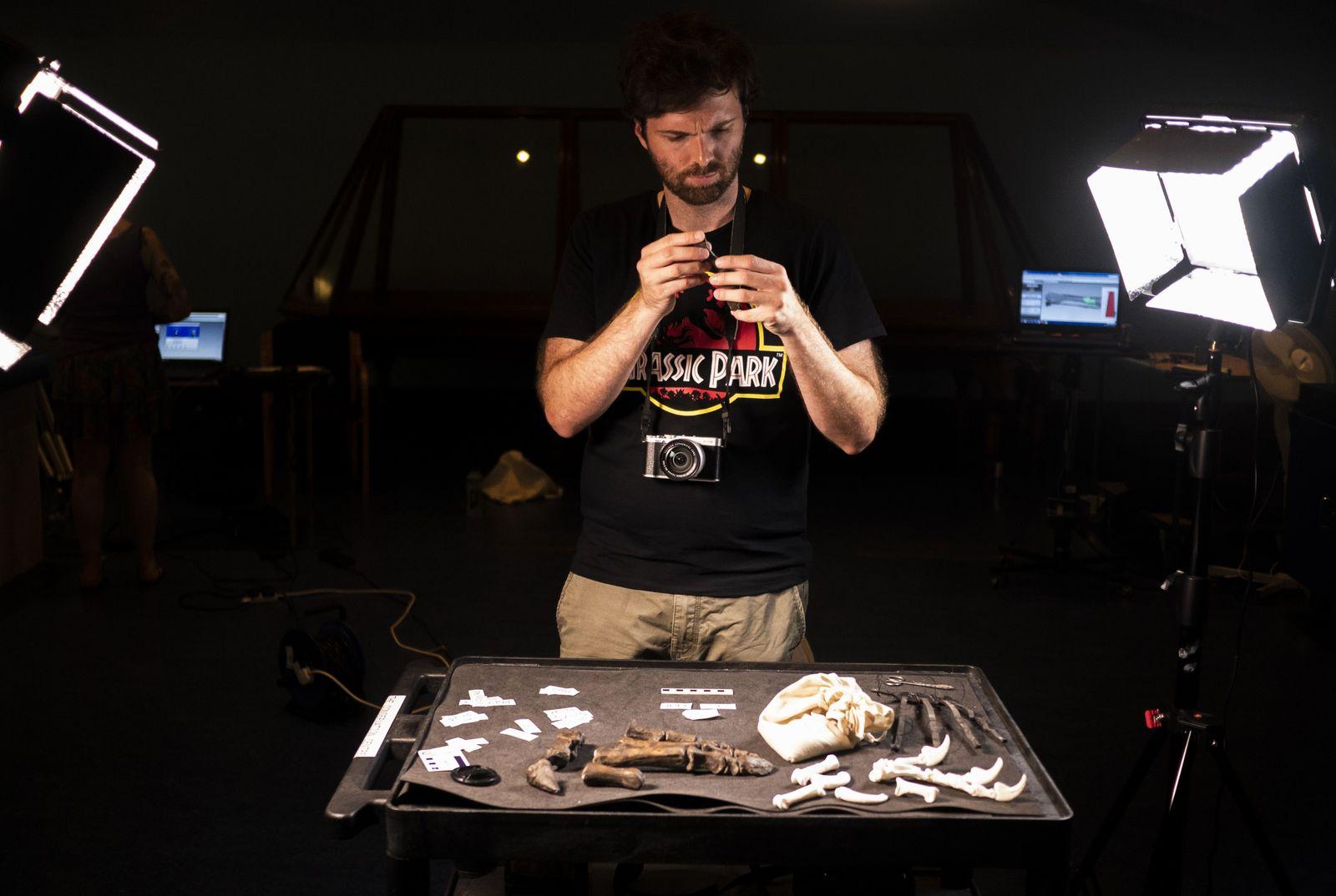 João Leite examines Mantelliosaurus hand bones. Close examination of the individual bones allows him to deduce ...