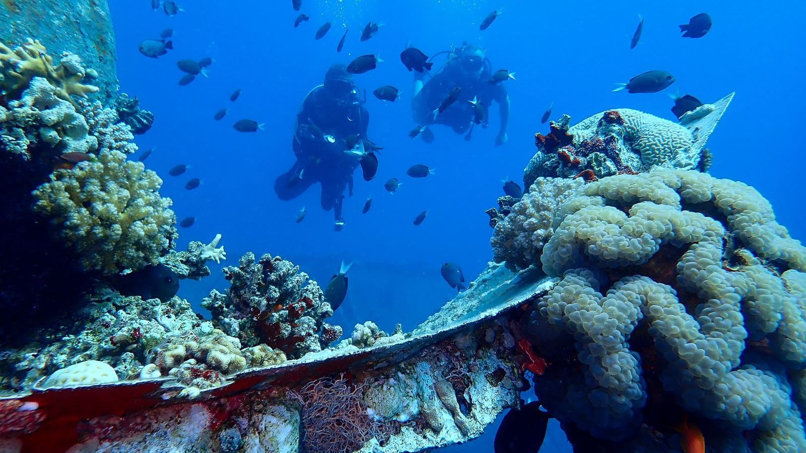 Diving in the Red Sea, Aqaba