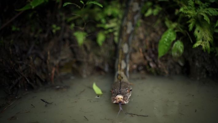 Jungle Sacrifice