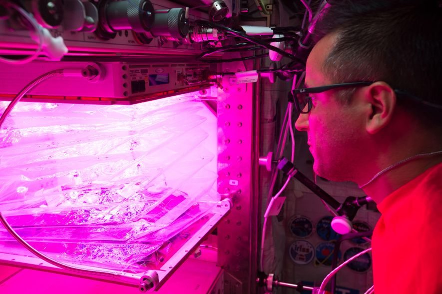 On the ISS, NASA astronaut Joe Acaba manages the 'Veggie facility' in 2017. This study – ...