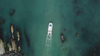 Breakout - Kaikōura Dolphins