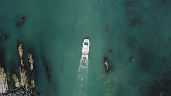 Kaikoura Dolphin breakout