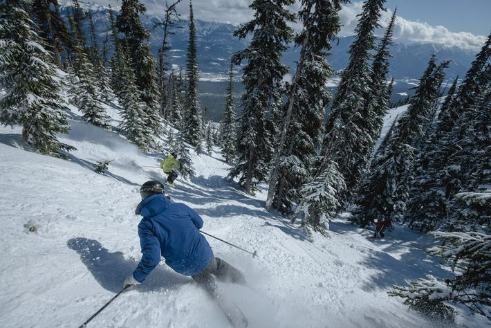 Downhill skiing through the trees at Kicking Horse Mountain Resort, British Columbia, Canada. Image: Destination BC/Reuben ...