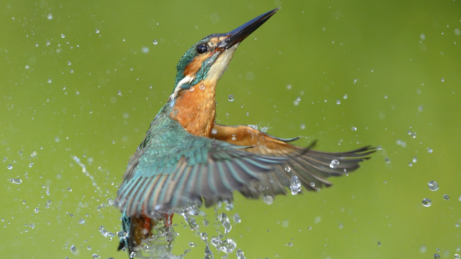 Bird Of The Week Kingfisher National Geographic