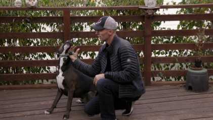 Reinforcing Healthy Dog Behaviours