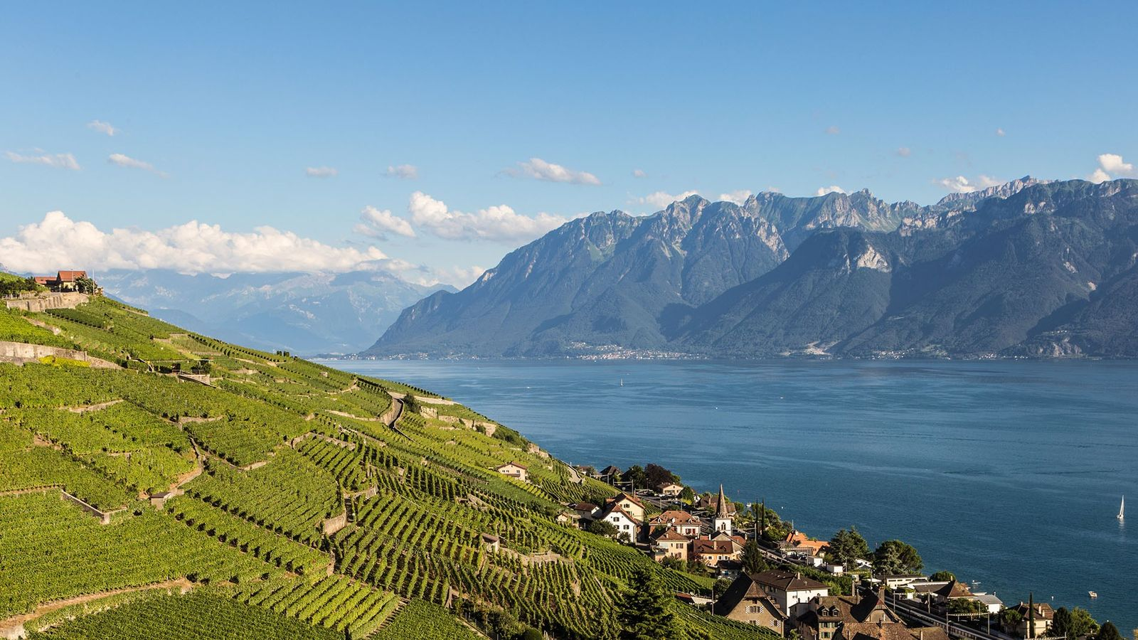 Terraced vineyards in Lavaux, a UNESCO World Heritage Site