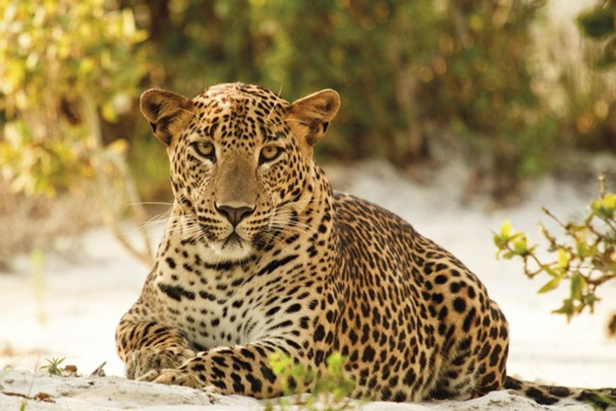 Jetwing Safari Camp welcomes guests into the sights of Sri Lanka's wilderness