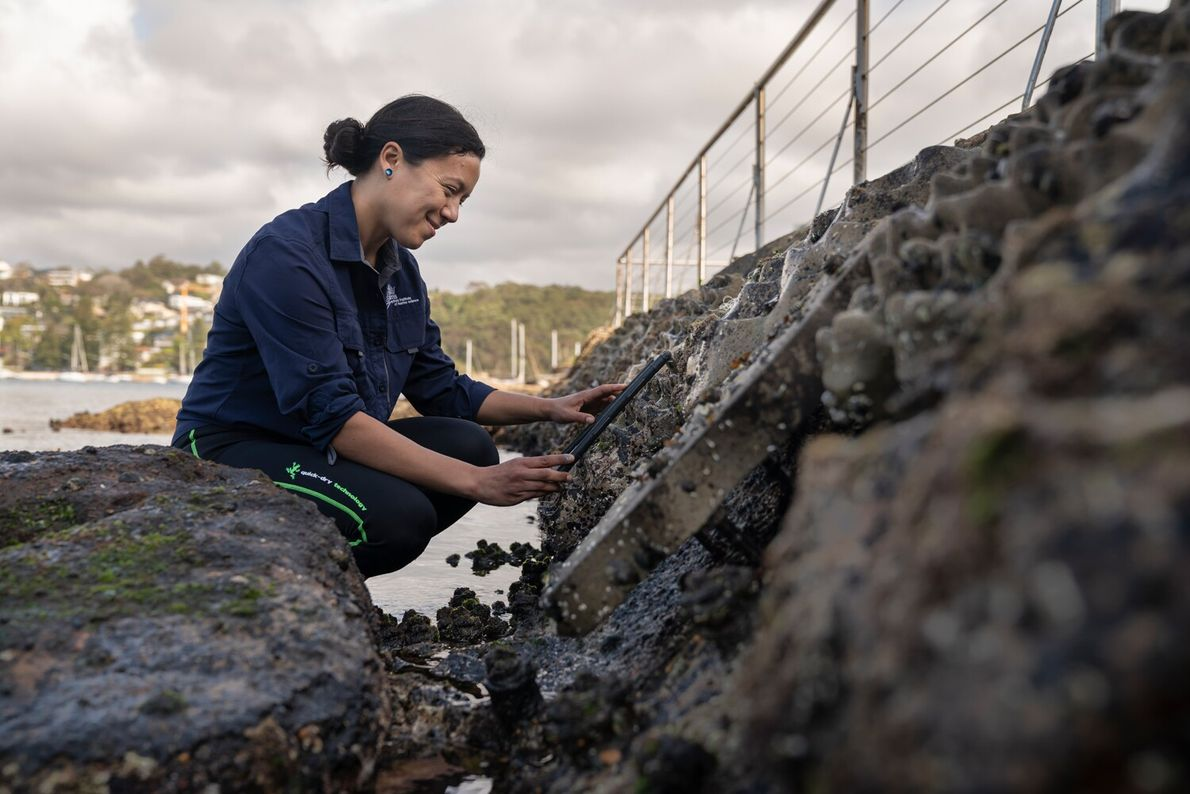 Dr Maria Vozzo of the Living Seawalls team conducting a biodiversity survey on one of their ...