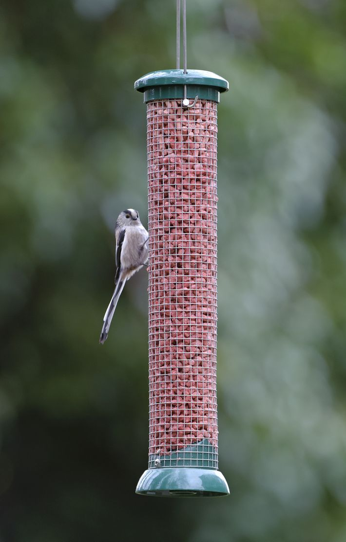 Long tailed tit hanging from a feeder.