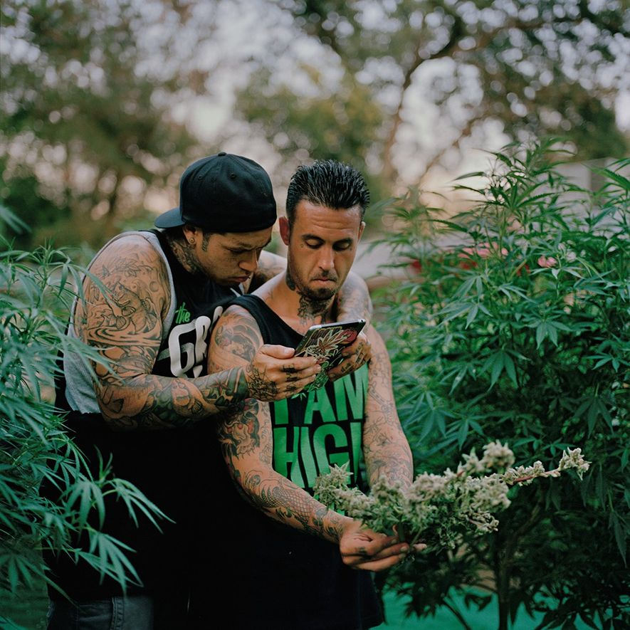 In northern California, Nicholas and Richard Lopez take photographs of their harvest to share online. Recovering ...