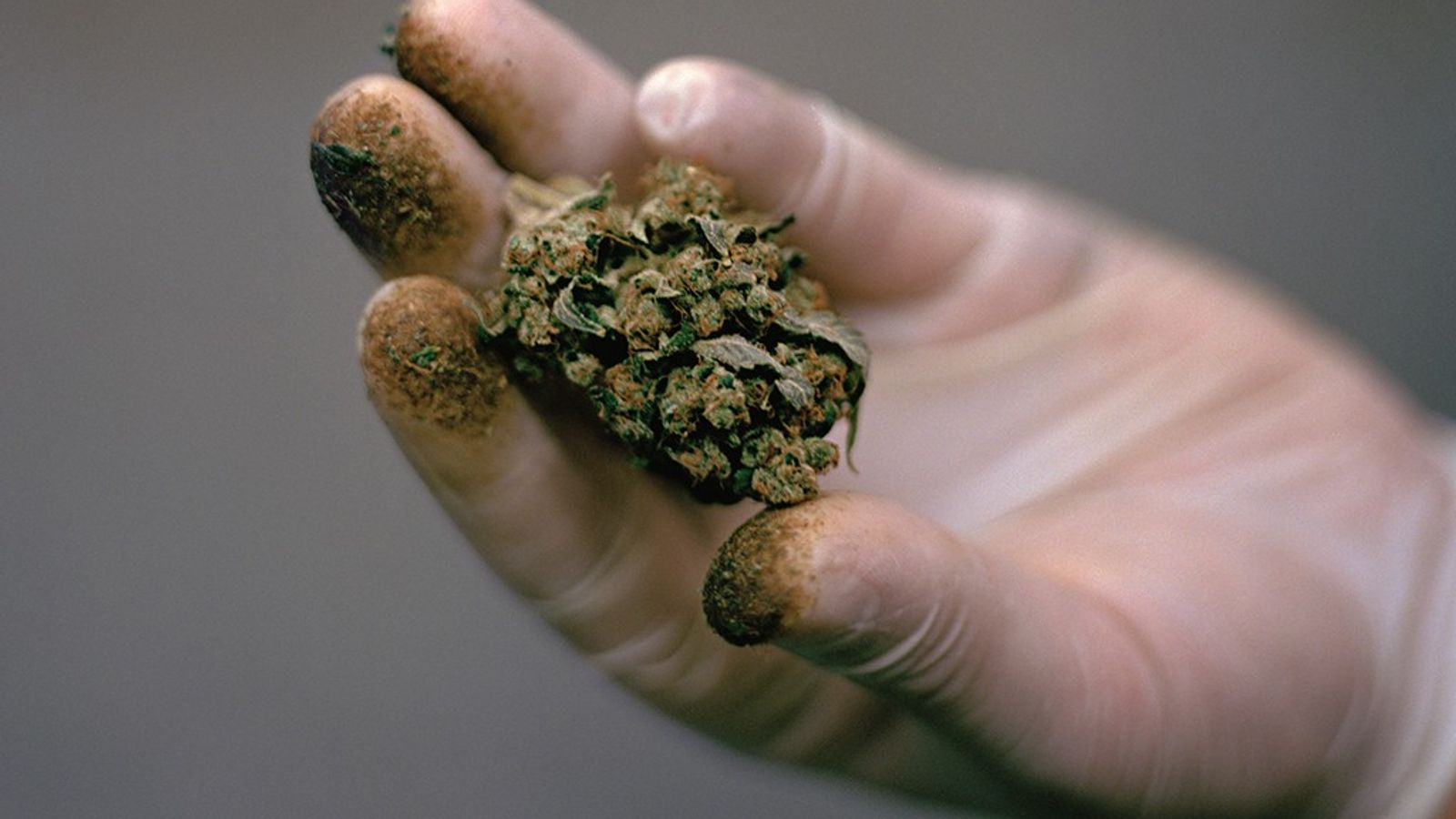 Marijuana's advocates believe the long-maligned plant can enhance life—and help deliver people from sickness and pain. ...
