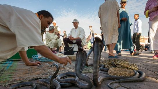 Snake charmers in Marrakech, Morocco
