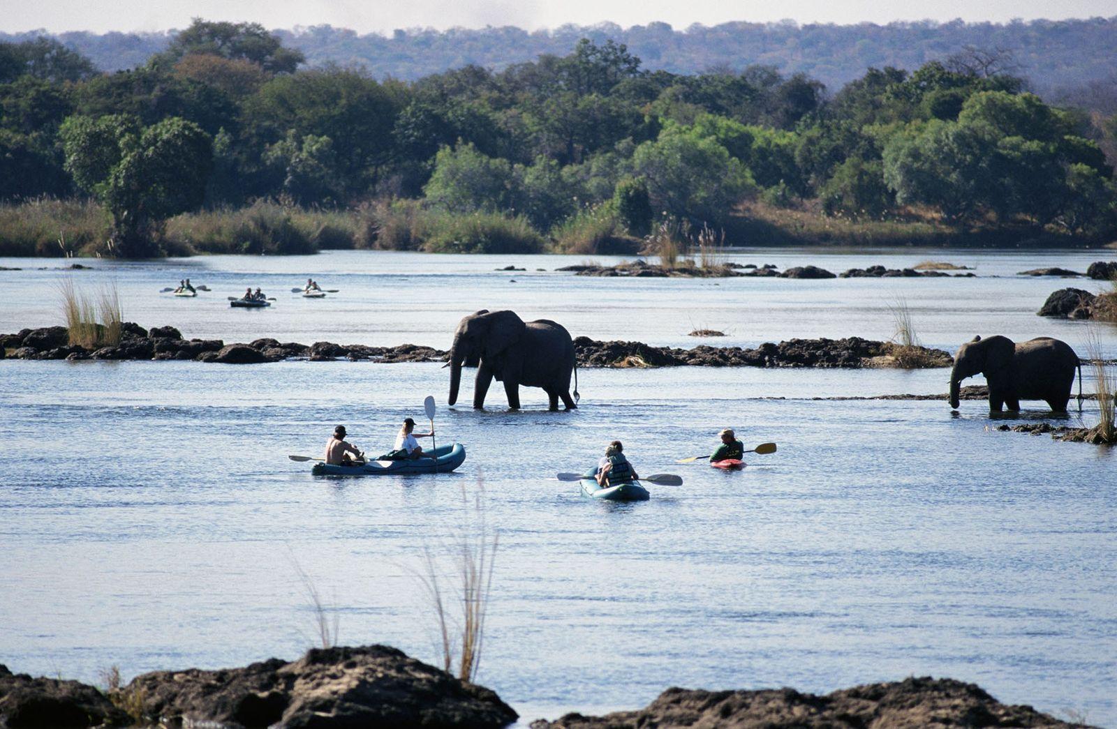Elephants in the Zambezi river