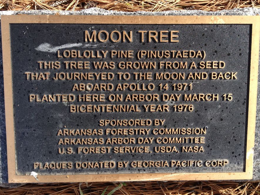 A plaque indicates a 'Moon Tree' in Arkansas. While some of these trees are well-documented locally, ...
