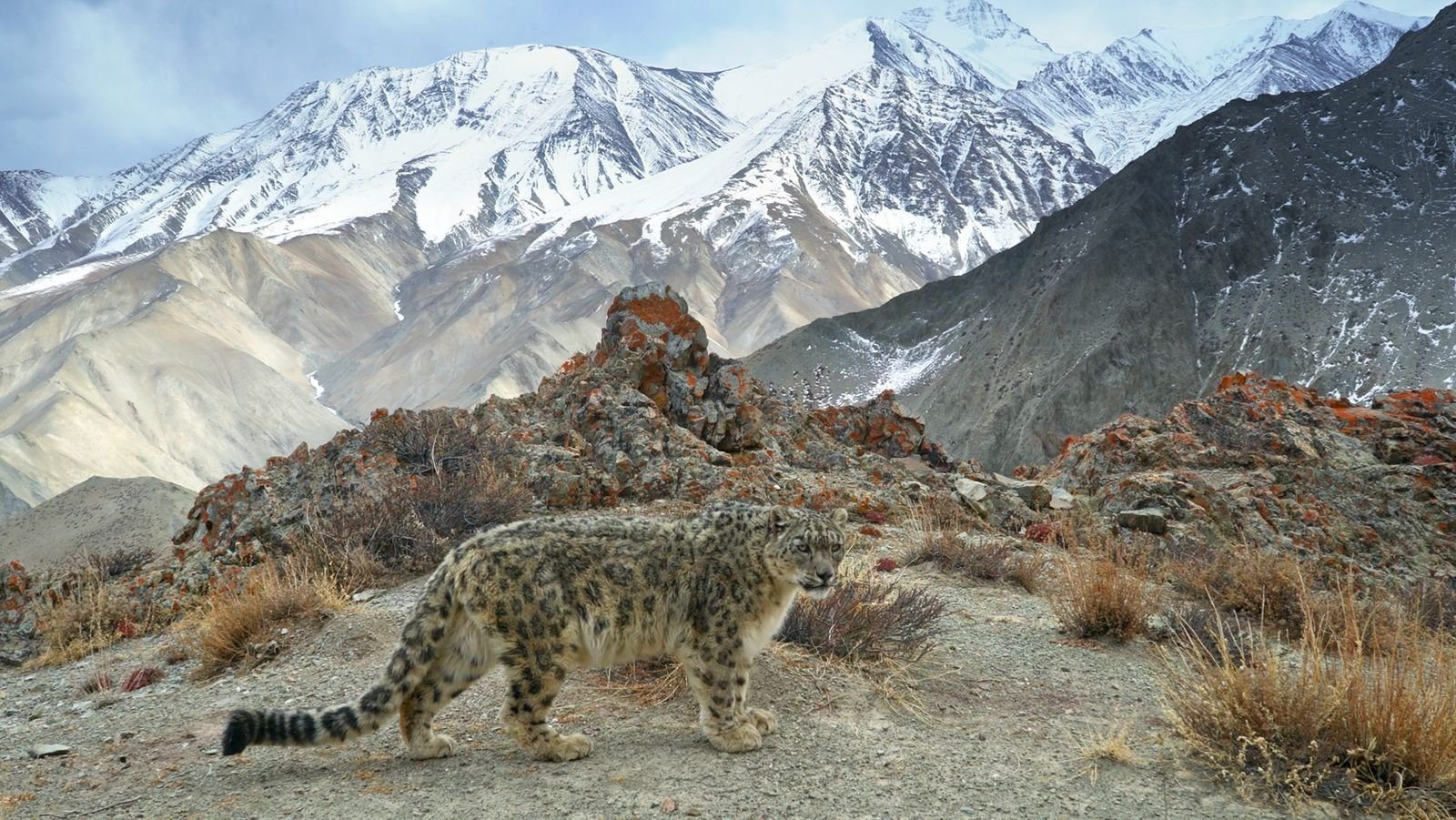 Animals on the Edge: filming Hostile Planet