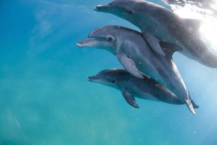 Dolphins. Image: Getty