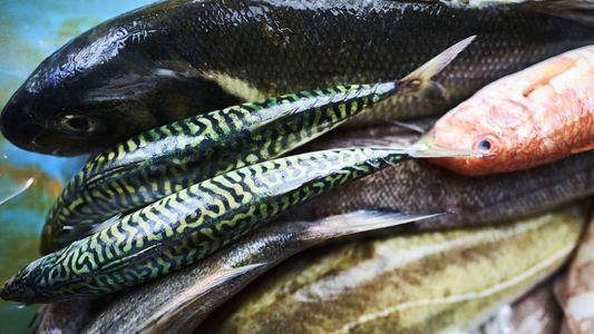 Interview: Nathan Outlaw, the Cornwall-based chef obsessed with fish