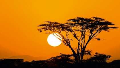 Kenya: Safari like Simba