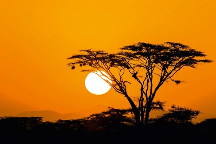 The quintessential image of the African adventure: see it with your own eyes.