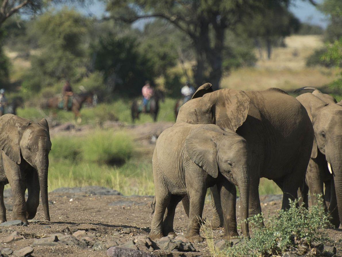 Partner content:  Riding Safari Association
