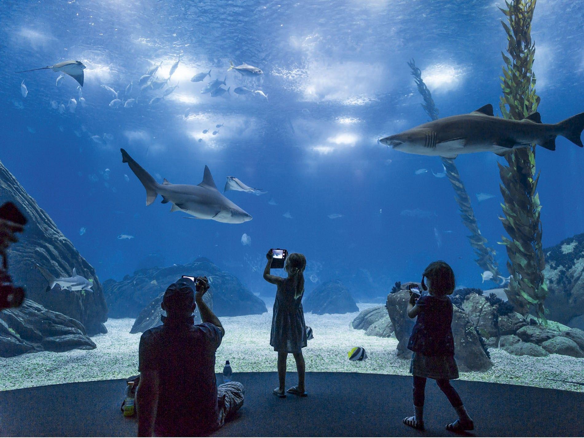 Oceanário Aquarium