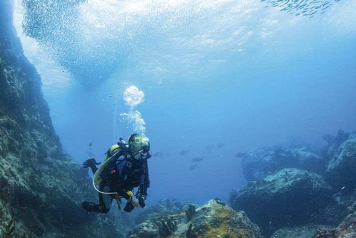 Bait fish at Sisters Rocks, Grenada