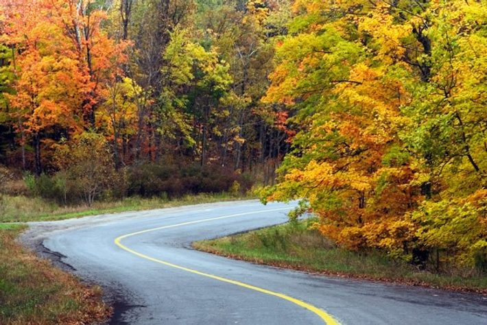 Winding road through the Ontario forest.