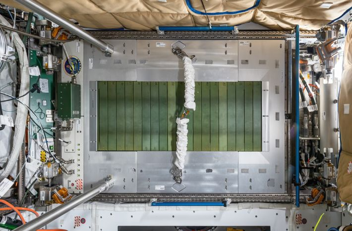 An overhead view of the International Space Station's Combined Operational Load-Bearing External Resistance Treadmill - C.O.L.B.E.R.T. – ...