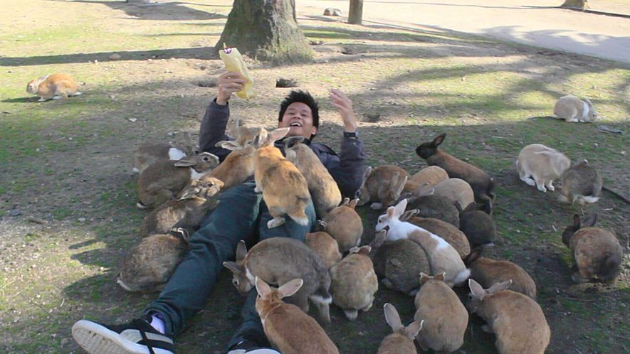 """See Why They Call It """"Rabbit Island"""""""