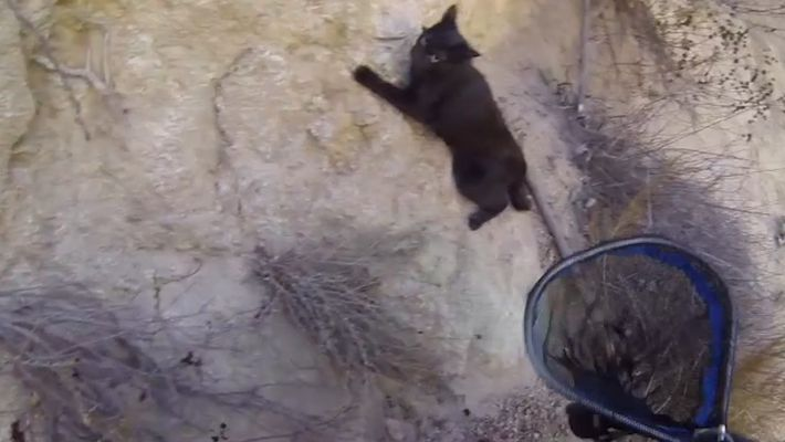 Black Cat Saved in Cliffside Rescue